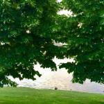 Sunset Walk with Thomas Vintage Lake 6.6.18 #3