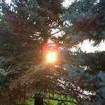 Sunset Walk with Thomas Vintage Lake 6.6.18 #4
