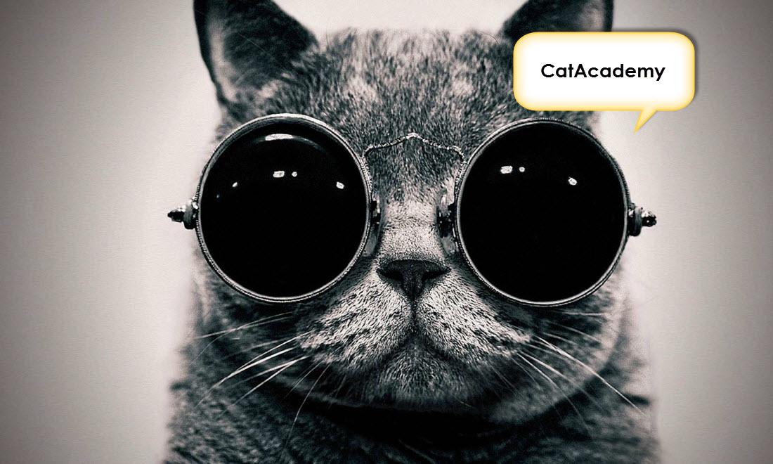 Learn Spanish Using Cat Photos With CatAcademy iOS App