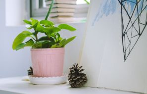 Remember The Watering Time of your Plants with Planty App
