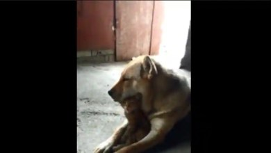 Video of cat and dog 'cuddle buddies' may make you crave for a hug too – it s viral
