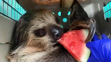 Zoo shares 'favourite animal antics from 2020' video. Have you seen it yet? – it s viral