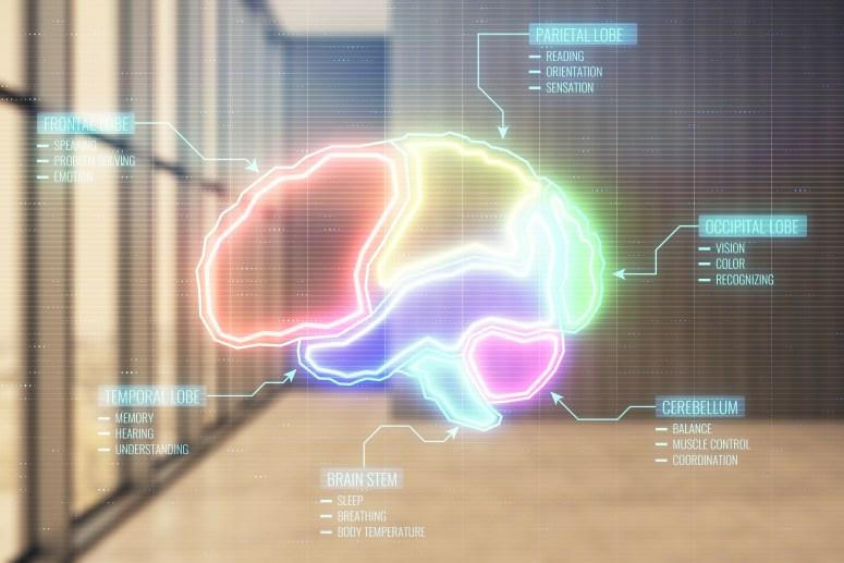 brain picture dr rashidi.jpg