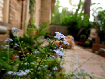 My In-Between Garden