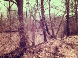 coves-april-f