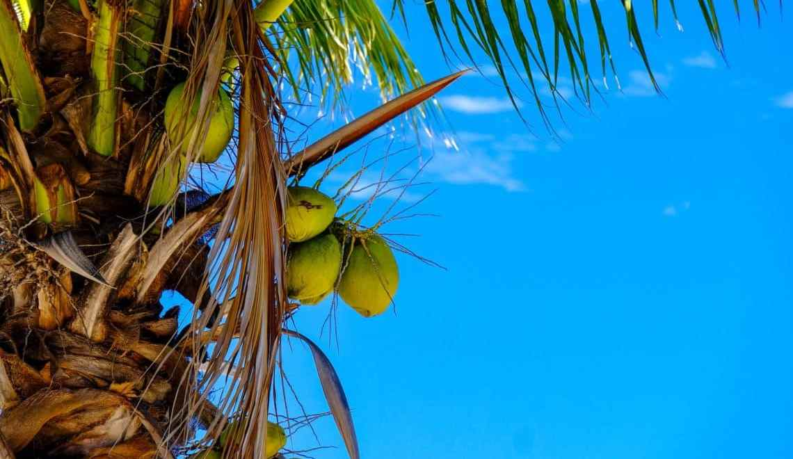We are Nuts about Coconuts! Find out why!