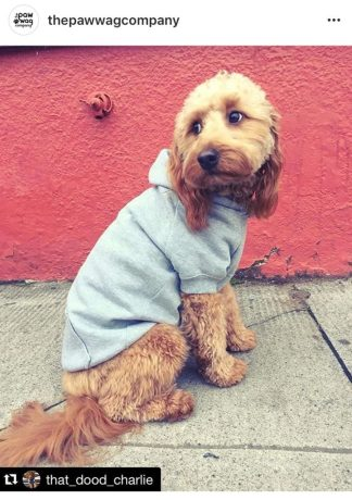pockets in dog clothes