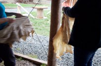 Workshop participants spend hours drying their hides so they are ready for smoking the next day