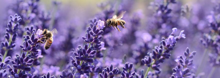 help the bees, A Tiny Tidy Tip! ~ Help The Bees., The Tidy Lady, The Tidy Lady