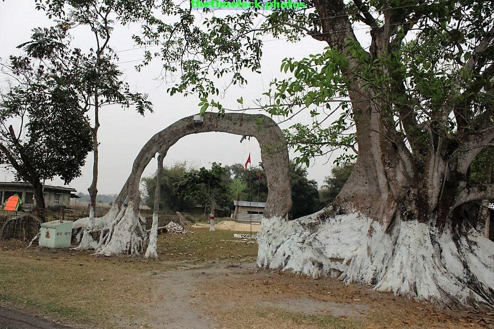 Bend Tree