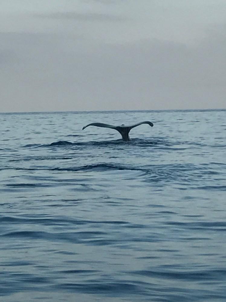 Whale Watching Maui Hawaii Honeymoon