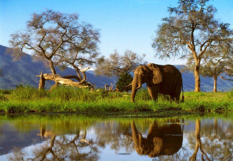 Mana Pools Zimbabwe Tourism