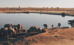China invade Zimbabwe National park