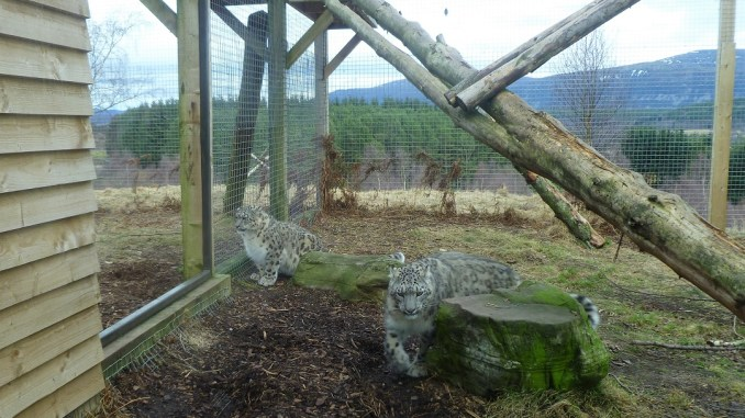 Highland Wildlife Park, Kincraig