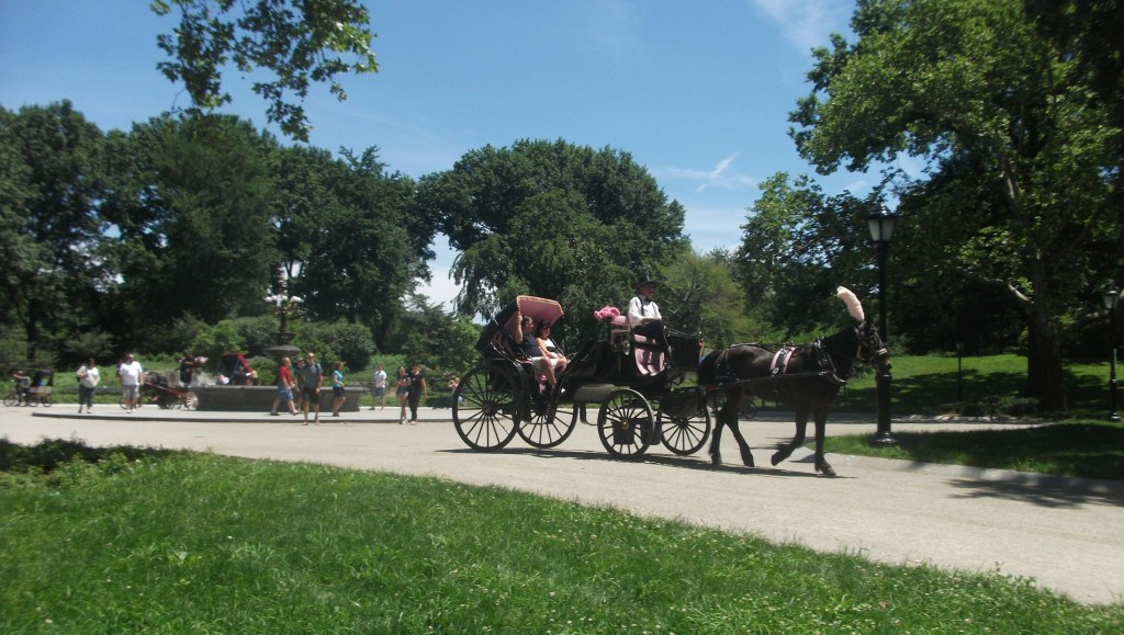 Horse Drawn Carriages do tours of Central Park