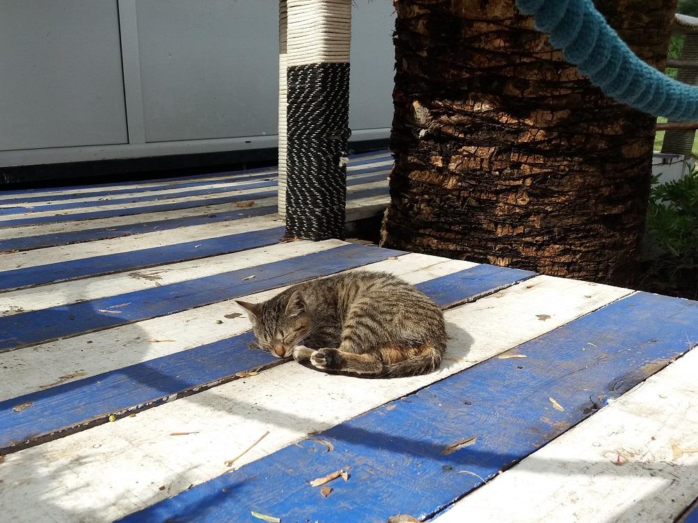 Sleeping Cat in Budva Montenegro