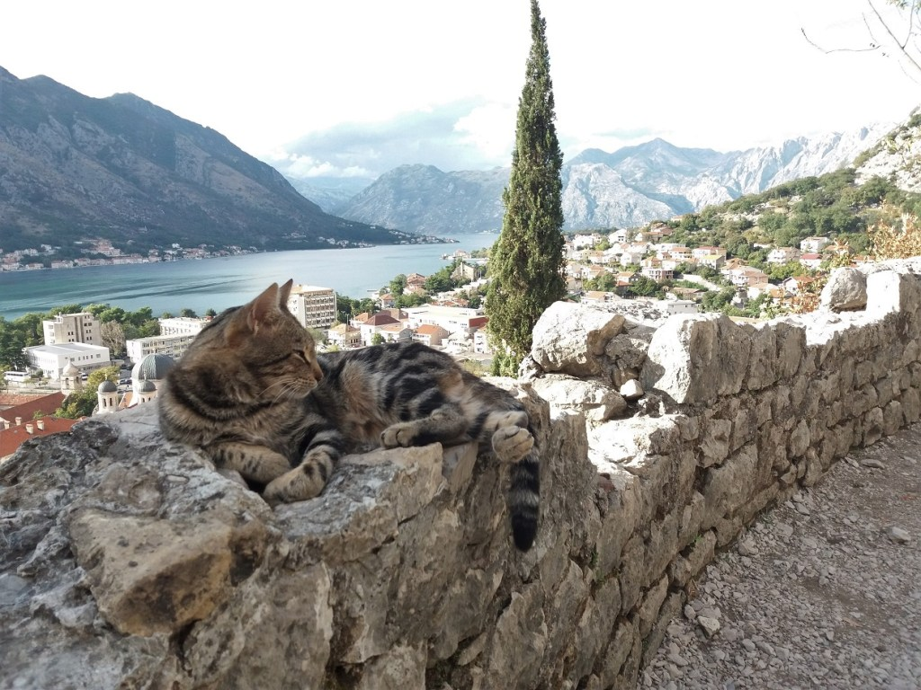 This lazy kitty along the Kotor City Walls is just one of the many cats of Montenegro