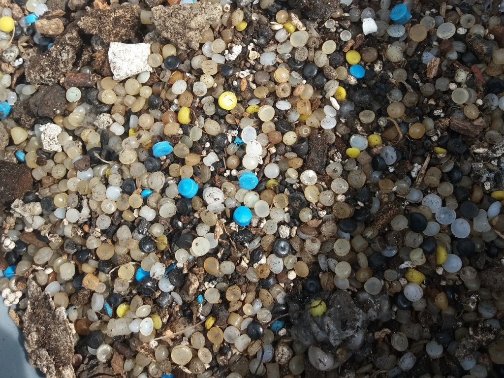 Nurdle Pollution at Ferrycraigs Beach during Shore You Care