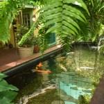 Kermit's Key Lime Shoppe - Koi Pond