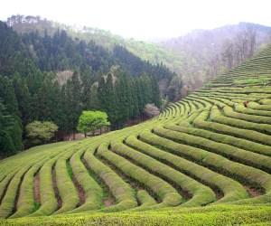 valley boseong korea