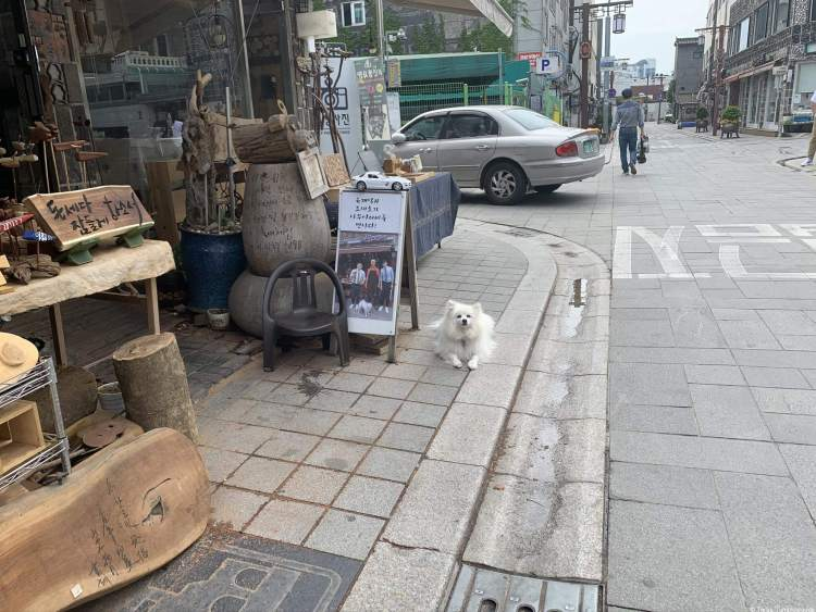 A traditional handicraft shop that carves wood with a white fluffy dog in front of the shop.