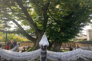 An ancient huge tree with a traditional statue supporting a low fence where many have tied their white paper wishes.