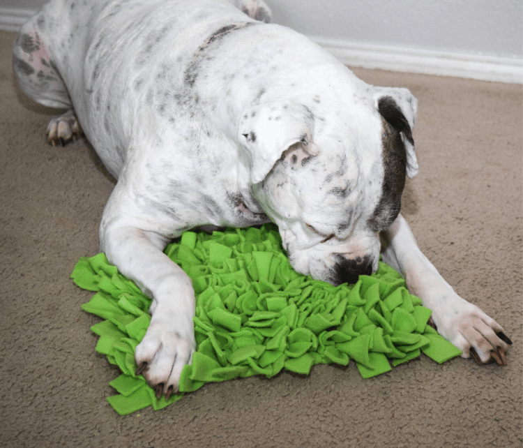 Hank using his DIY Pet Snuffle Mat