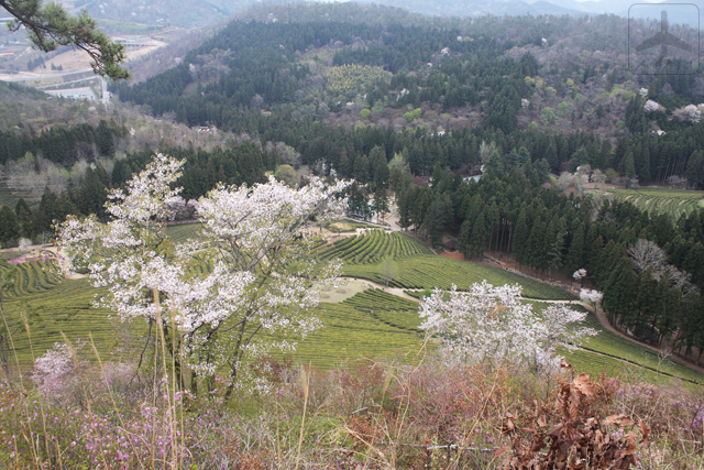 Other than Seoul, you could consider visiting the South Korean countryside such as Boseong, home to the Daehan Dawon Tourist Tea Plantation (Boseong Green Tea Plantation)