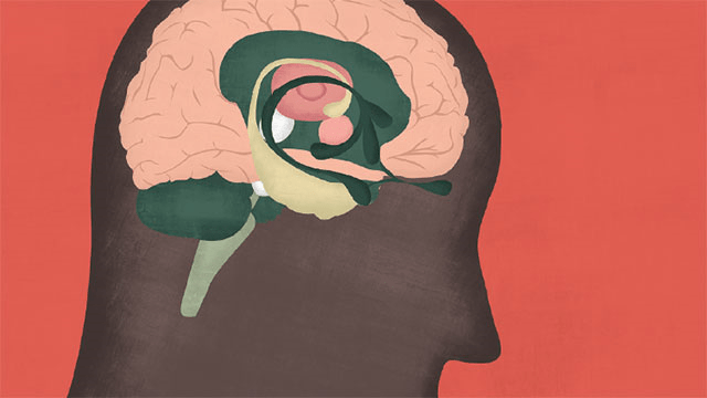 The Transgender Brain; Scientist's New Study on the Differences between Cis and Trans Brains.