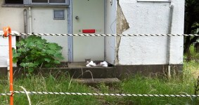 Asagaya Housing danchi lazy cat