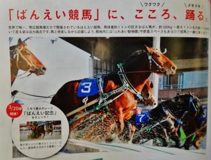 ban-ei keiba horse racing Hokkaido 2