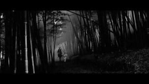 Black Cat Kuro neko bamboo night walk 1