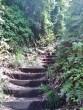 overgrown path above Kuji hills Kanagawa Japan
