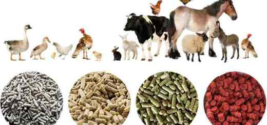 How to Start Animal Feed Business in Nigeria