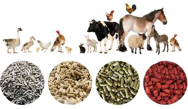 How to Start Animal Feed Business in Nigeria - Livestock Business Opportunities
