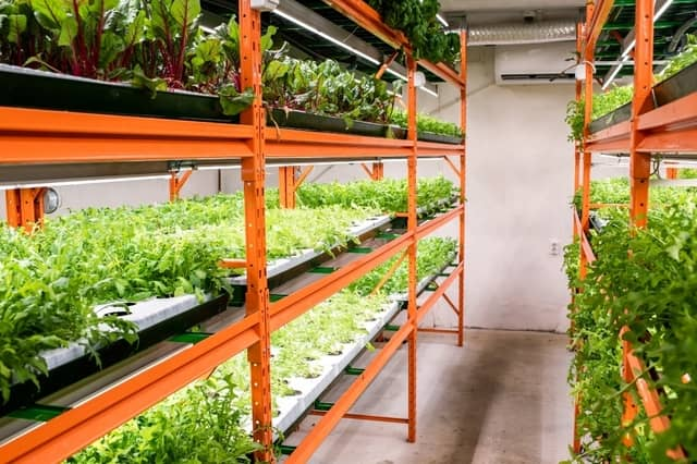 How to Grow Organic Produce Year-Round for Your Biz