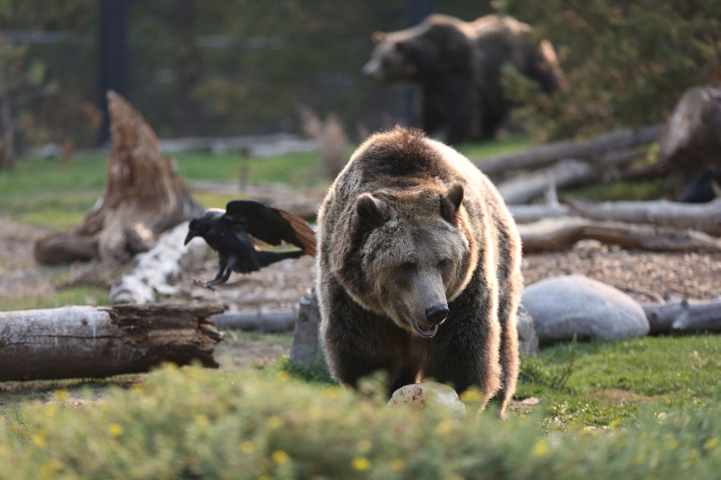 U S Significantly Weakens Endangered Species Act