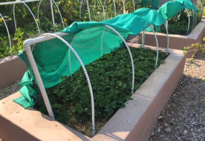 A low tunnel provides an easy way to cover your raised beds in any kind of weather or to use netting and rabbit fencing efficiently.