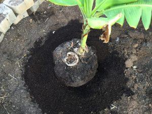 Add the soil mix