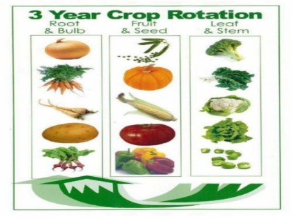 Vegetable families for crop rotation