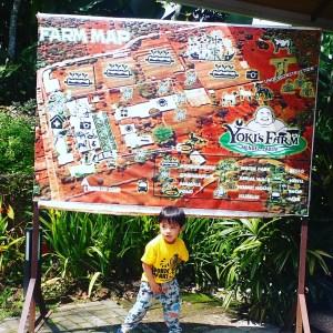 YOKIS FARM MAP