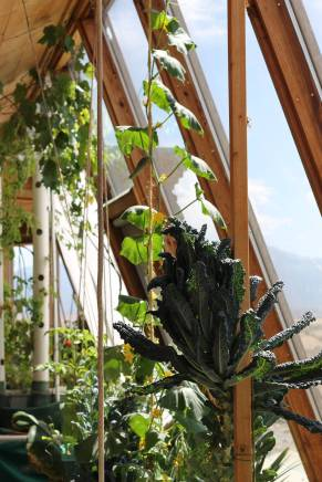 Given south-facing windows and plentiful gray water, it's amazing what you can get to grow indoors.