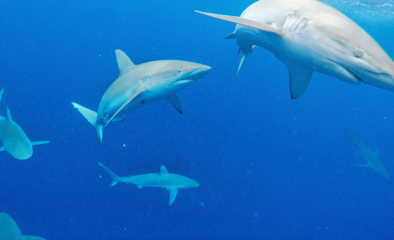 Cage Diving With Sharks Photo4