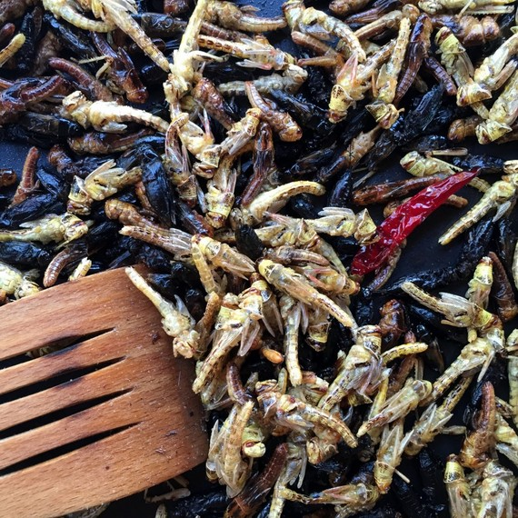 Edible Insects Take the Spotlight