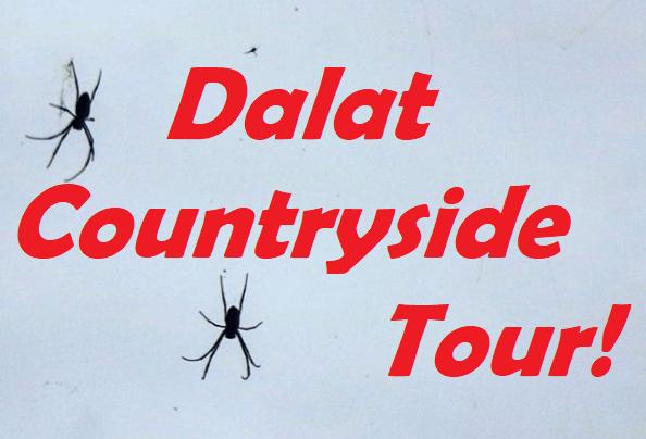 , Da Lat Countryside Tour: Rose Garden & Minority Village, The Travel Bug Bite