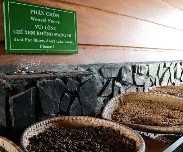 Da Lat Countryside Tour: Weasel Poop Coffee Plantation