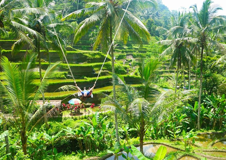 Flying Over Rice Fields: Ubud, Bali 2018