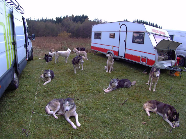 , Volunteering at a Dogsled Farm – Snowdragons, Austria – Part 3 (Guest Post), The Travel Bug Bite, The Travel Bug Bite
