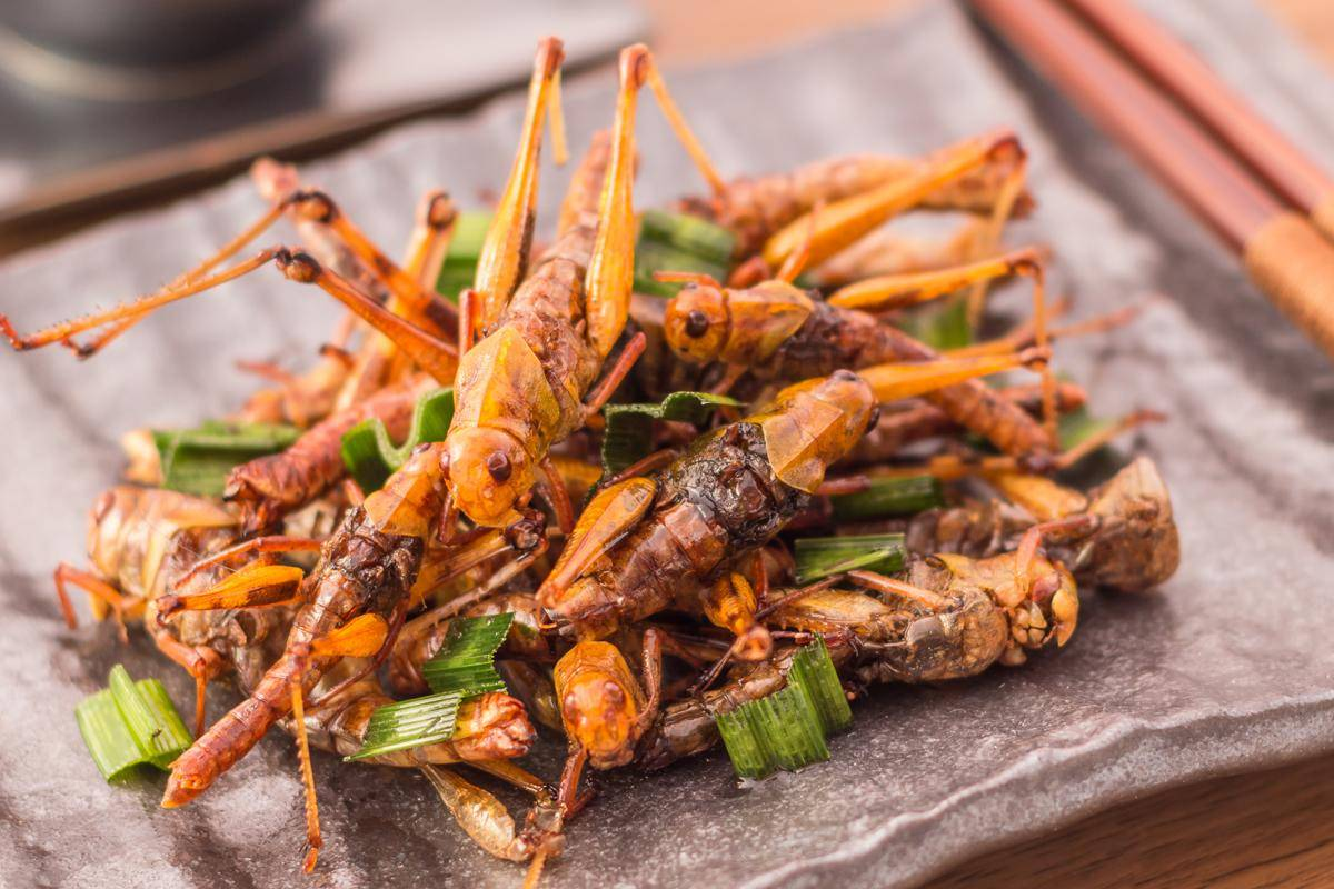 , Mealworm Monday: Air-Fried Silk Worms, The Travel Bug Bite