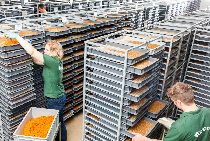 Insect (Lesser Mealworm) Production at Kreca Ento-Food